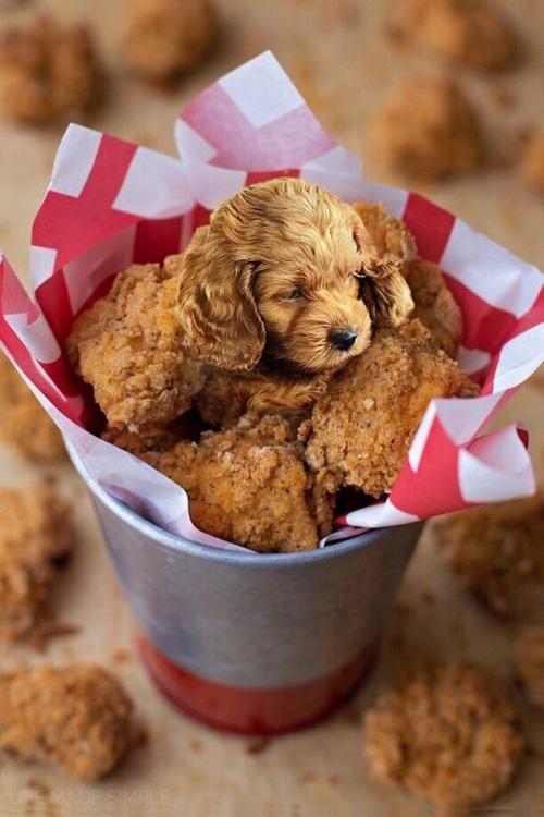 dog-on-food-11