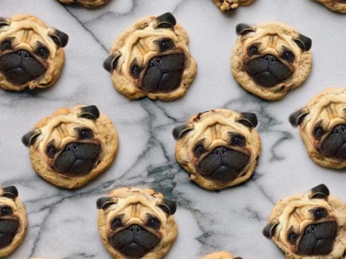 dog-on-food-12