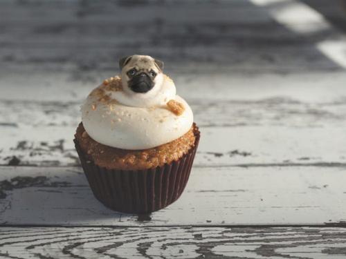 dog-on-food-2