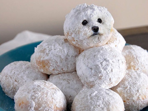 dog-on-food-3